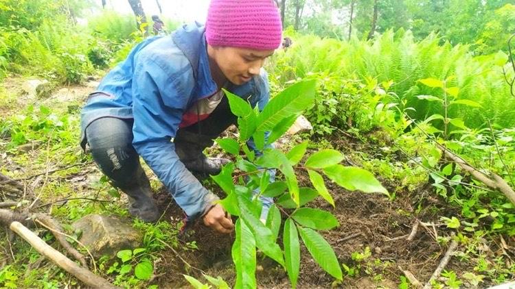 गोरखामा बाँदर फकाउन जंगलमै फलफुल