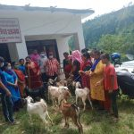 आरुघाट गाउँपालिकाद्वारा सय जना बिपन्न महिलाहरुलाई बाख्रा बितरण